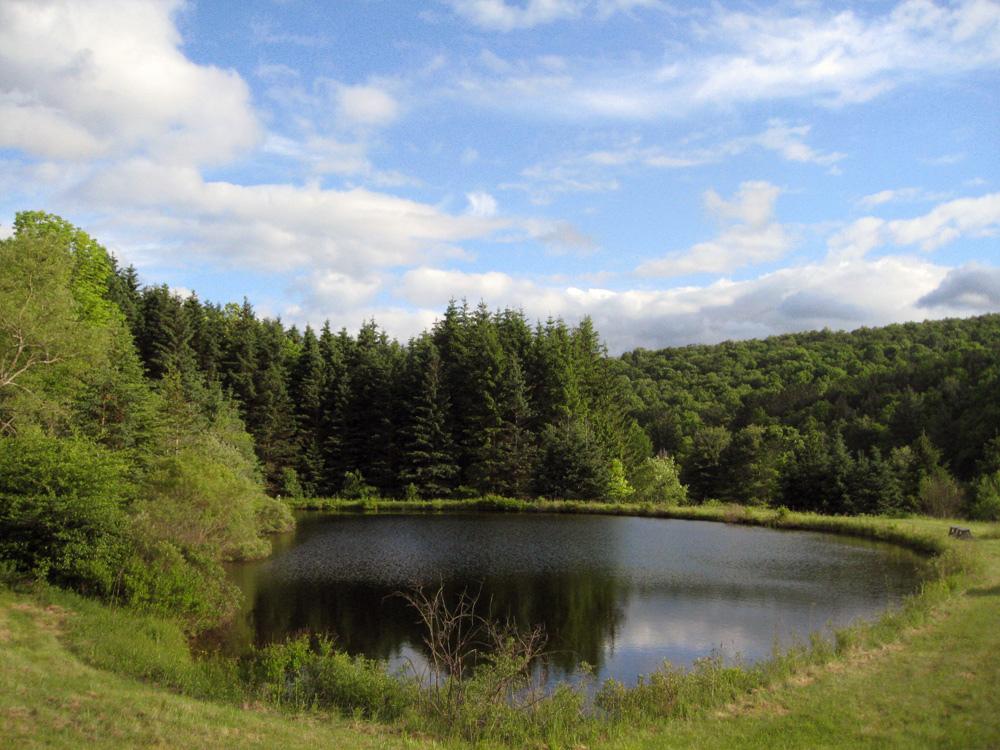 pond_full